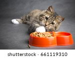 Stock photo funny lazy cat pulls his paw to a bowl full of dry food on a gray background 661119310