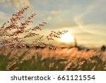 meadow grass flower orange tone ... | Shutterstock . vector #661121554