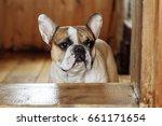 french bulldog in the... | Shutterstock . vector #661171654