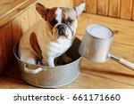 french bulldog in the... | Shutterstock . vector #661171660
