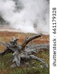 Small photo of Nature Persevering Around Dead Tree Remains and Geysers of Yellowstone NP