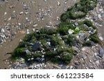 Seaweed On Sand With Shells Al...