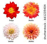 A Set Of Four Flowers  Parrot...