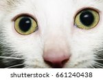 Stock photo portrait of beautiful white kitten with intricate light green eyes looking at camera 661240438