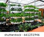 vegetables are grown using...   Shutterstock . vector #661251946