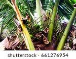 coconut tree | Shutterstock . vector #661276954