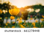 field of blooming yellow... | Shutterstock . vector #661278448