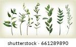 Eucalyptus  Agonis  Thyme...