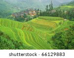 Green rice terrace in Guangxi province, China - stock photo