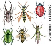 insect collection. watercolor... | Shutterstock . vector #661300060