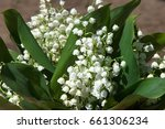lily of the valley flowers....   Shutterstock . vector #661306234