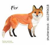 watercolor fox painting. hand... | Shutterstock . vector #661390618