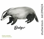 watercolor badger painting.... | Shutterstock . vector #661390624