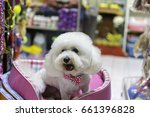 White Poodle Dog In Pet Store