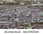 rotten wood and lichen. close... | Shutterstock . vector #661540264