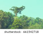 the big tree in the rain forest ... | Shutterstock . vector #661542718