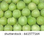 guava  psidium guajava . exotic ... | Shutterstock . vector #661577164