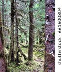 Small photo of Alaska Rain Forest