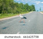 stork cross the road  | Shutterstock . vector #661625758