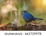 Blue Bird Resting On Beautiful...
