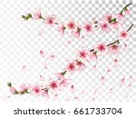 flying petals and blooming... | Shutterstock .eps vector #661733704