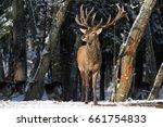 Belarus. Winter Wildlife...