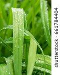 closeup nature view of green... | Shutterstock . vector #661784404