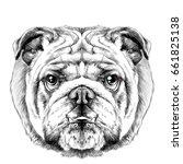 dog breed english bulldog... | Shutterstock .eps vector #661825138