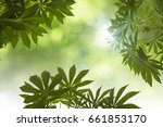 natural green leaves white... | Shutterstock . vector #661853170