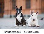 two bull terrier dogs posing... | Shutterstock . vector #661869388
