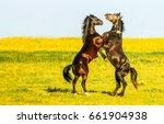 two dancing horses in field | Shutterstock . vector #661904938