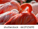 detail of flamingo head with... | Shutterstock . vector #661915690