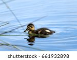 the small lonely duck in the...   Shutterstock . vector #661932898