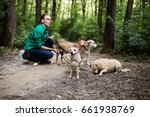 Stock photo dog walker with dogs enjoying in park selective focus on front dog 661938769