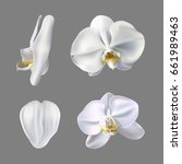Moon Orchid Flower Vector On...