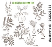 herbs used in cosmetology. hand ... | Shutterstock .eps vector #662028358
