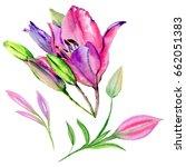 wildflower lily flower in a... | Shutterstock . vector #662051383