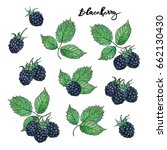 hand drawn painted set of... | Shutterstock . vector #662130430