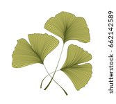 ginkgo biloba leaves | Shutterstock .eps vector #662142589
