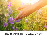 woman hand touching wildflowers ... | Shutterstock . vector #662173489