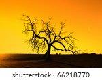 Death Tree Against Sunlight...