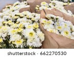 bunches of white baby...   Shutterstock . vector #662270530