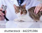 cat visiting vet for regular... | Shutterstock . vector #662291386