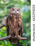 Stock photo an eagle owl 662293033