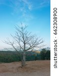 Dry Tree On The Horizon Of Blu...