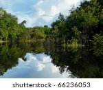 reflections of amazon river ... | Shutterstock . vector #66236053