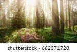 beautiful wild forest. summer... | Shutterstock . vector #662371720