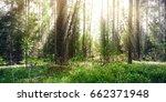 beautiful wild forest. summer... | Shutterstock . vector #662371948