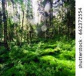 beautiful wild forest. summer... | Shutterstock . vector #662372554