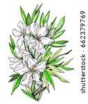 white apricot tropical flower... | Shutterstock . vector #662379769